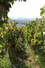 Обратный путь домой лежал через хорватский городок Самобор. Гостевой дом Павлин находится на холме среди виноградников.