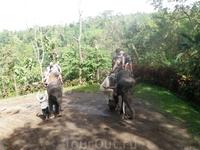 Прогулка на слоне по джунглям.