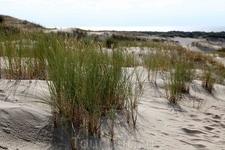 Ходить по дюнам можно только в строго отведенных местах