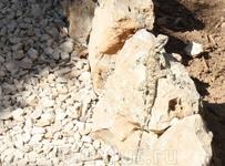 Ящерица в Гефсиманском саду