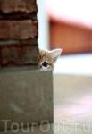 А в Питере кошки есть?