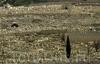 Фотография Еврейское кладбище