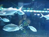 аквариум в аквариуме
