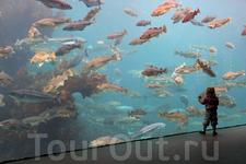Вода в аквариумы закачивается непосредственно из океана по трубопроводу, поэтому рыбы здесь обитают в своей естественной среде. Ежедневно в 13:00 происходит ...