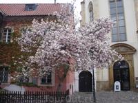 Прага - ВЕСНА