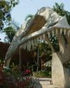 Фотография Парк Юрского периода