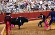 Самый верх искусства: не банально заколоть быка , а загипнотизировать его и дождаться падения