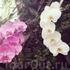 Орхидеи повсюду :) глаз не оторвать :)