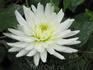 Многочисленные цветы