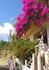 Цветущий Крит