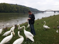 Понравилось кормить лебедей.