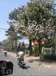 Далат не зря называют городом цветов. Цветы и цветущие деревья здесь повсюду