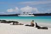 """""""Galapagos Journey III"""" проходит вдоль пляжа, где греются на солнце морские котики"""