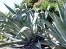 кактусы с неприличным словом