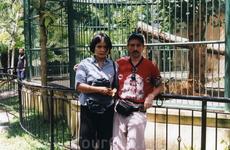 В зоопарке Бали - год Тигра