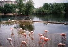 обязательно посетите Московский Зоопарк!
