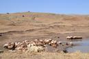 Здесь живут йезиды.А то их барашки