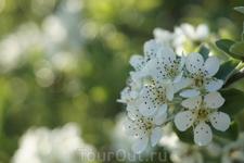 майские цветы на горе Аскети