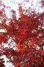 осень в ботане
