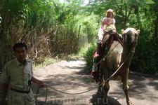 Бали/ сафари парк