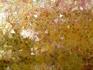Стены в Зале облицованы мозаикой из золотистого стекла