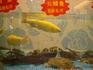 Аквариум в рыбном ресторане в несколько этажей. Ткнешь пальчиком - и через несколько минут рыбка готова...