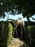 Знаменитые слоны в парке замка Галы в Пуболе