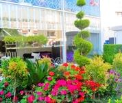 такие цветущие газончики в Мармарисе