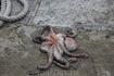 Вот наловили себе осьминогов на ужин:)