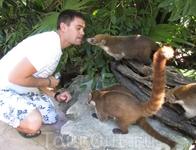 мексиканские друзья.коати
