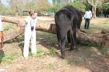 Слоновий питомник. Черный индийский слоненок.