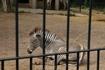 Рим.Зоопарк.