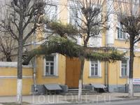 Как странно растет деревце на главной улице города...