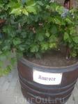 Пройдемся по сортам винограда, которые там представлены   Алиготе́ (фр. Aligoté) — белый винный сорт винограда. Также известен под названиями Мухранули ...
