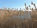 В советские времена эти озера использовались для орошения полей. От них шли трубы чаще всего на более высокие участки местности, где также были такие вот ...