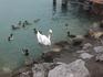 Знакомство с хозяевами озера