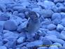наглые и безцеремонные воробьи только на пляжах Ялты?