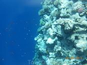 Голубая лагуна. Здесь очень красивые коралловые рифы и много много рыб
