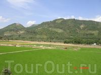 Природа Вьетнама- высокие горы поросшие лесом, пальмы, поля покрытые нежной зеленью рисовых всходов