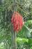 Цветы Бали