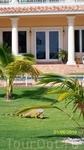 Это не Ямайка - это остров Гранд Кайман, колония Англии. Его в списке нет. Игуаны гуляют как коты