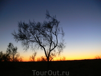 ночная прогулка по степи