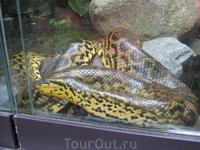 Змея, ленивая и сытая