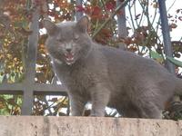Кот из района Монмартр-мы с ним поговорили-очень общительный...))))