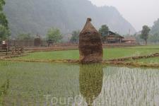 Тут же поле засеяно рисом.
