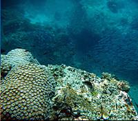 Залив Манго