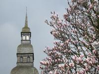 В конце марта во Франции уже всё в цвету.