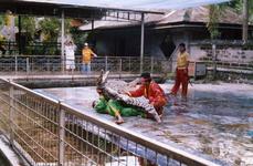На крокодиловой ферме - представление для туристов