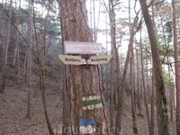 единственный найденный указатель в лесу)