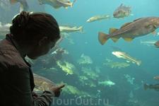 Самое интересное в олесуннском Атлантическом парке - это огромный аквариум с местными обитателями Атлантики.